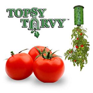 topsy aturvy tomatoe