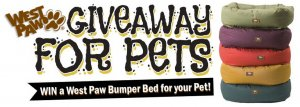 pet bed giveaway